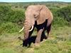 Urlaub 4 - Garden Route und Addo Elephant Park